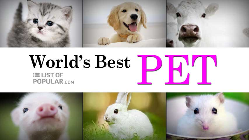 Best Pet for Homes   All Domestic Animals List - Safe Pets at Home