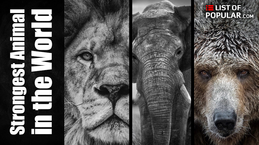 Most Powerful Animal in the World - List of Popular